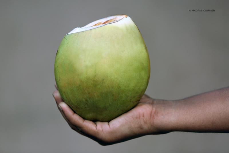 coconut_vendor_madras_courier