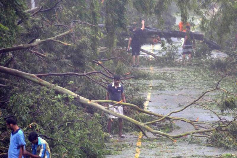 fallen, trees, cyclone, hudhud