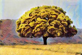 Casuarina, Tree