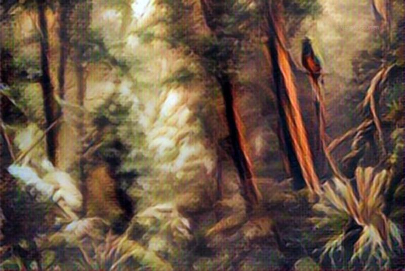 Amazon, Forest, Illustration, bird