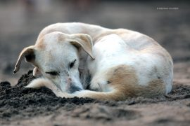 abandoned_dog_madras_courier