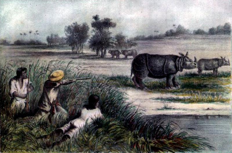 Painting, javan, rhino, hunted