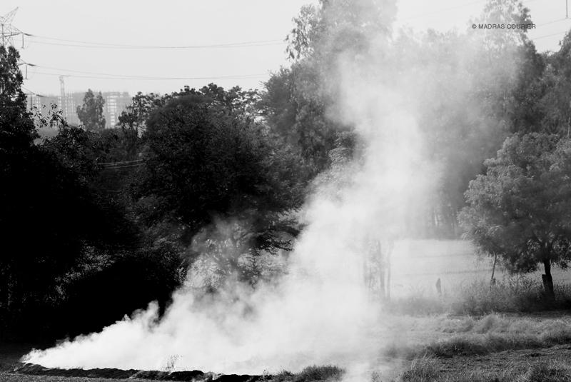 Burning Paddy Fields