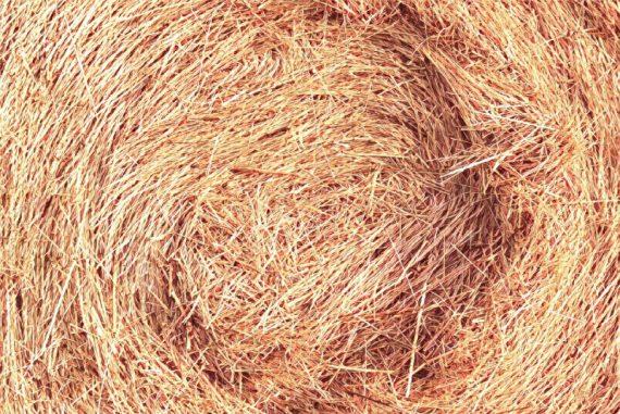 needle-haystack-madras-courier