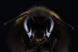 bees_understand_zero_madras_courier